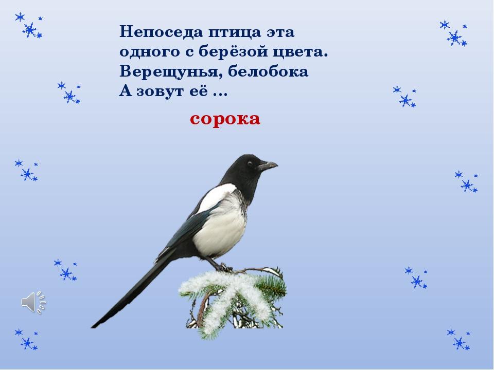 Непоседа птица эта одного с берёзой цвета. Верещунья, белобока А зовут её … с...