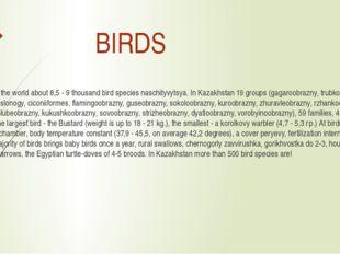 BIRDS In the world about 8,5 - 9 thousand bird species naschityvytsya. In Ka
