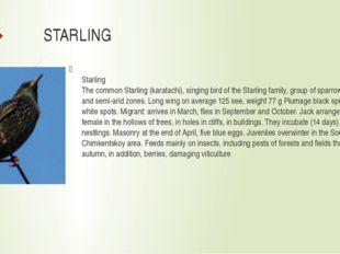 STARLING Starling The common Starling (karatachi), singing bird of the Starli
