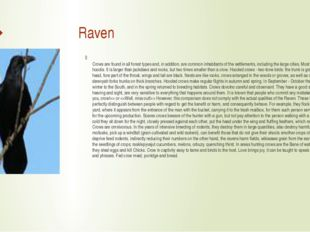 Raven Crows are found in all forest types and, in addition, are common inhab
