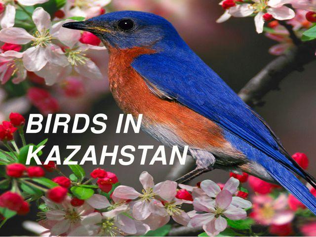 BIRDS IN KAZAHSTAN