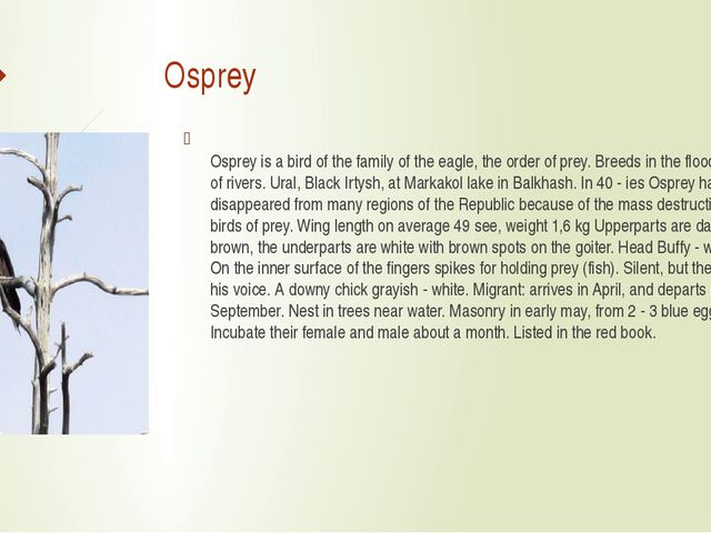 Osprey Osprey is a bird of the family of the eagle, the order of prey. Breed...
