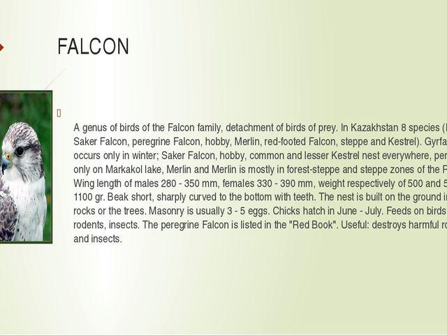 FALCON A genus of birds of the Falcon family, detachment of birds of prey. In...