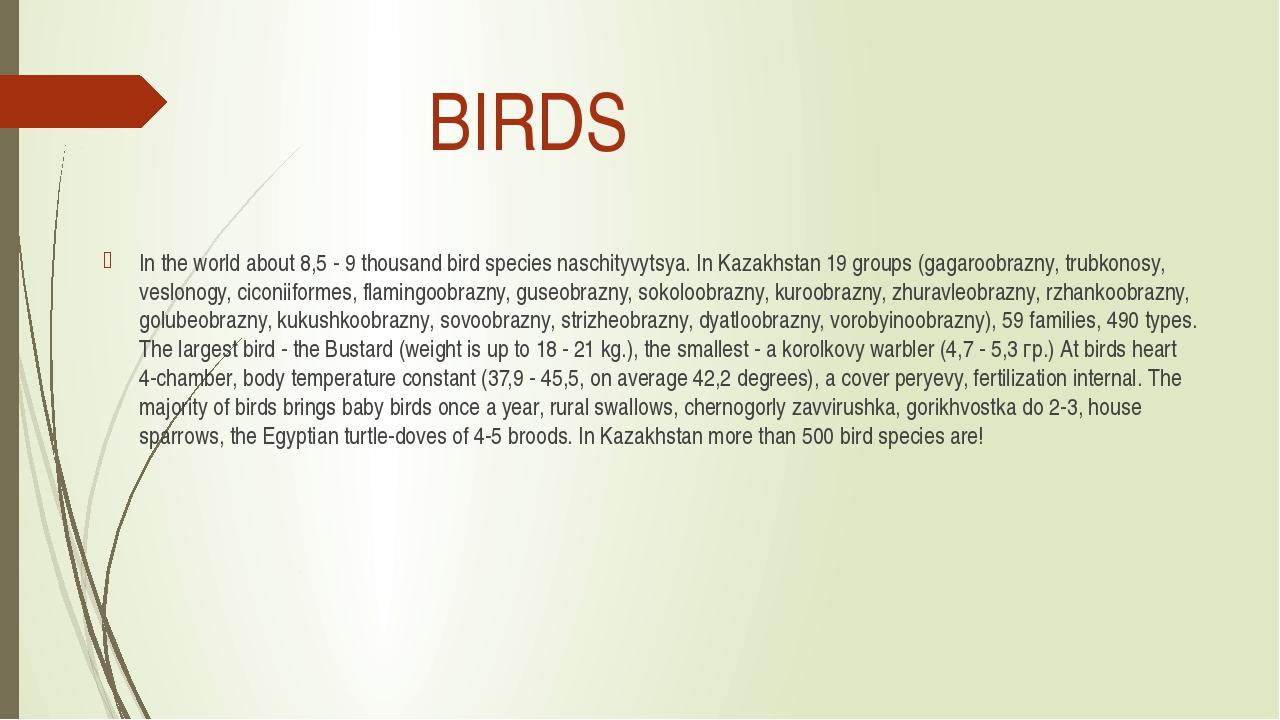 BIRDS In the world about 8,5 - 9 thousand bird species naschityvytsya. In Ka...