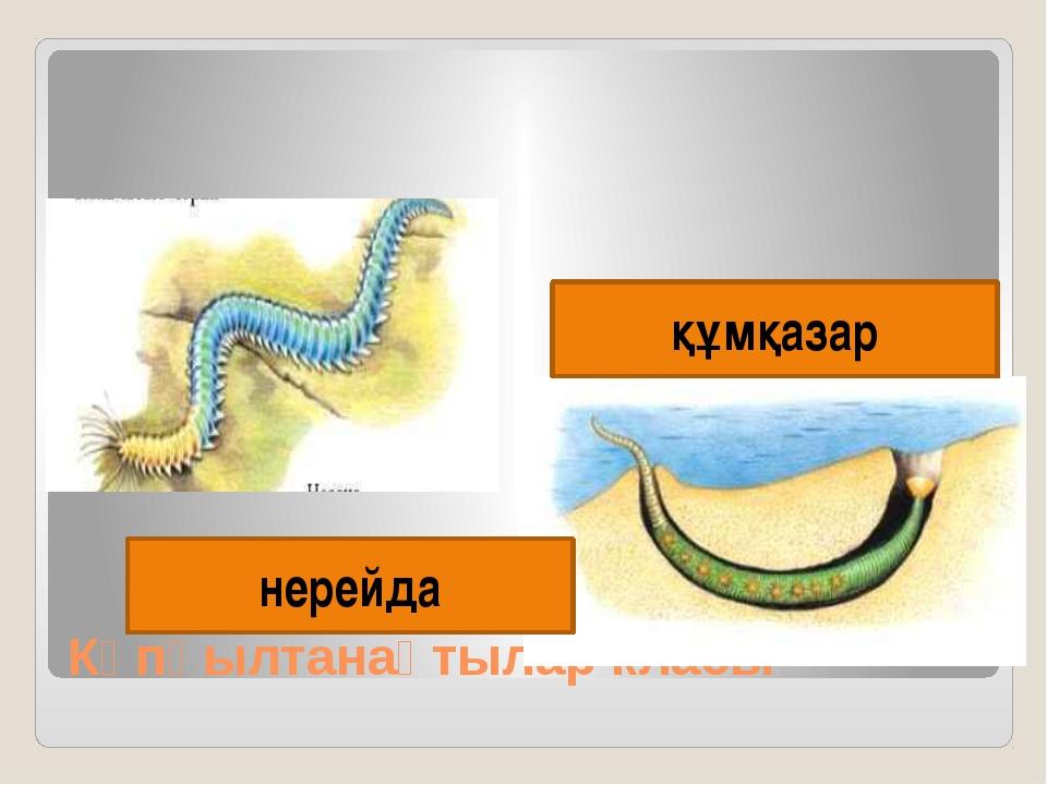 Көпқылтанақтылар класы нерейда құмқазар