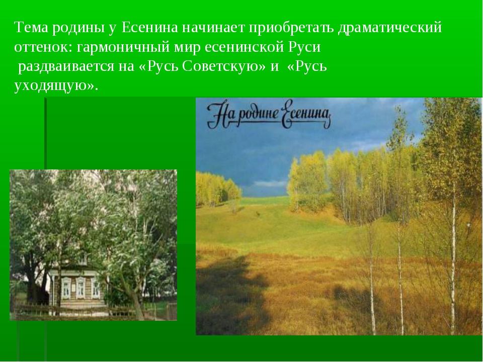 Тема родины у Есенина начинает приобретать драматический оттенок: гармоничный...