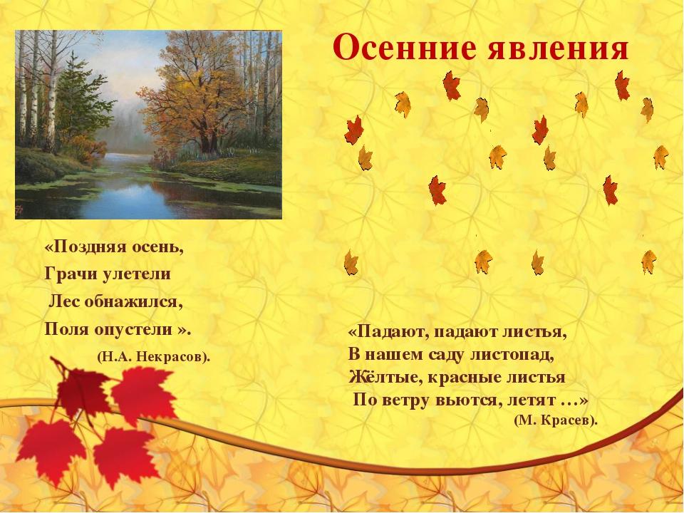 Осенние явления «Поздняя осень, Грачи улетели Лес обнажился, Поля опустели »....