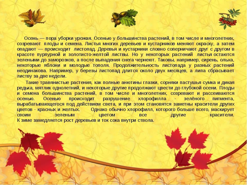 Осень — пора уборки урожая.Осенью у большинства растений, в том числе и мно...