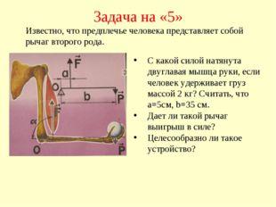 Задача на «5» С какой силой натянута двуглавая мышца руки, если человек удерж