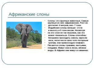 Африканские слоны Слоны- это крупные животные. Самые крупные из них- африканс