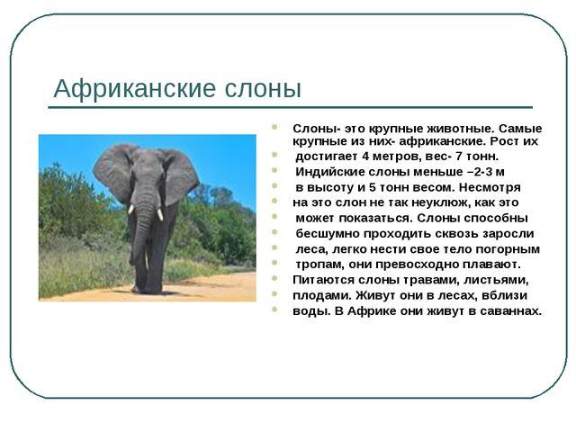 Африканские слоны Слоны- это крупные животные. Самые крупные из них- африканс...