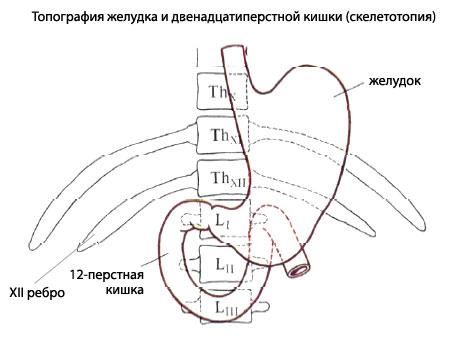 http://www.eurolab.ua/img/anatomy/a_69_7.jpg