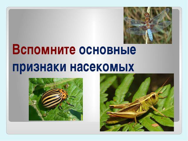 Вспомните основные признаки насекомых