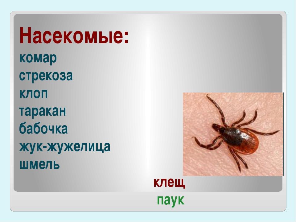 Насекомые: комар стрекоза клоп таракан бабочка жук-жужелица шмель клещ паук