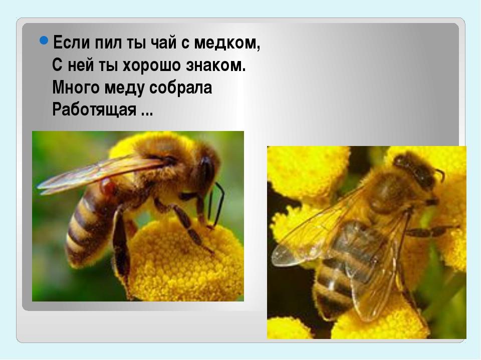 Если пил ты чай с медком, С ней ты хорошо знаком. Много меду собрала Работящ...