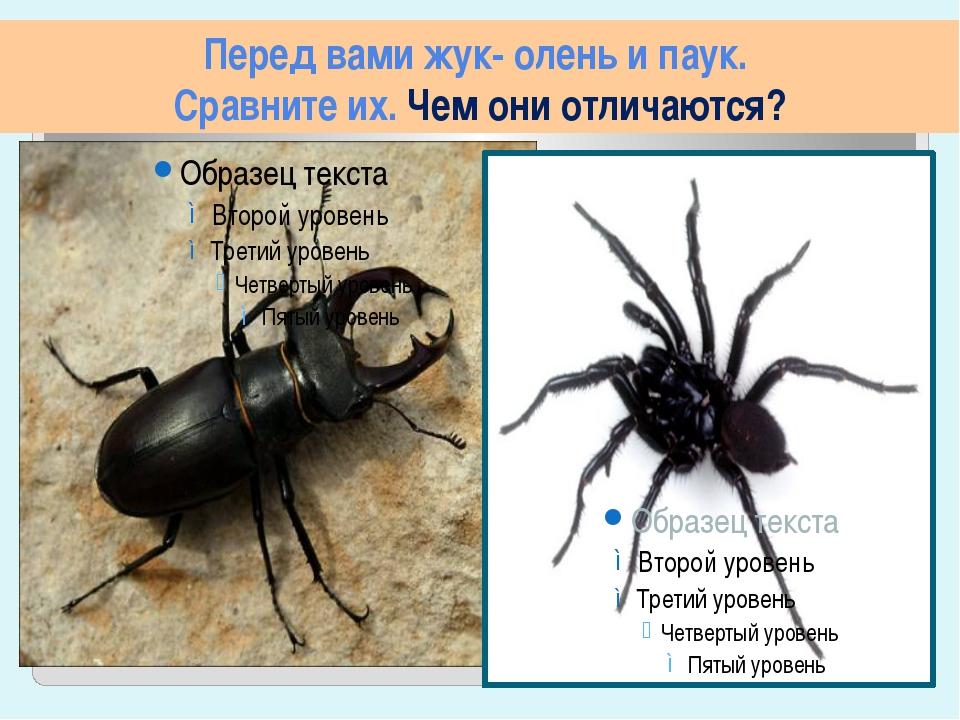Перед вами жук- олень и паук. Сравните их. Чем они отличаются?