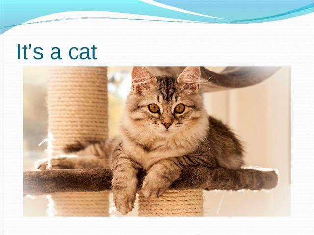 It's a cat