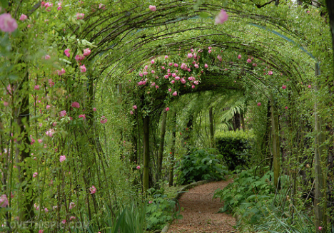 http://www.lovethispic.com/uploaded_images/22116-Magical-Garden-Path.png