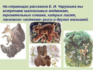 На страницах рассказов Е. И. Чарушина мы встречаем шаловливых медвежат, трога