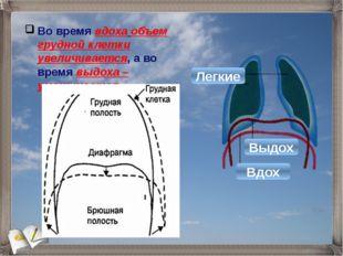 Во время вдоха объем грудной клетки увеличивается, а во время выдоха – уменьш