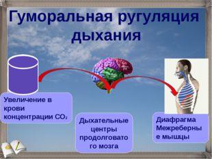 Гуморальная ругуляция дыхания Увеличение в крови концентрации СО2 Дыхательны