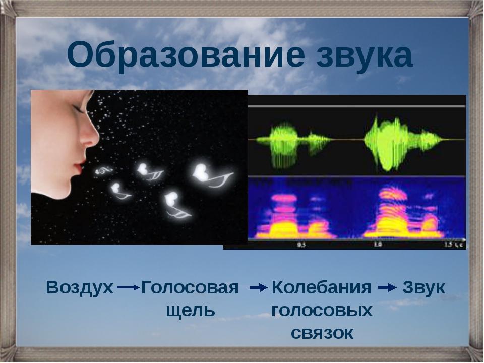 Воздух Голосовая щель Колебания голосовых связок Звук Образование звука