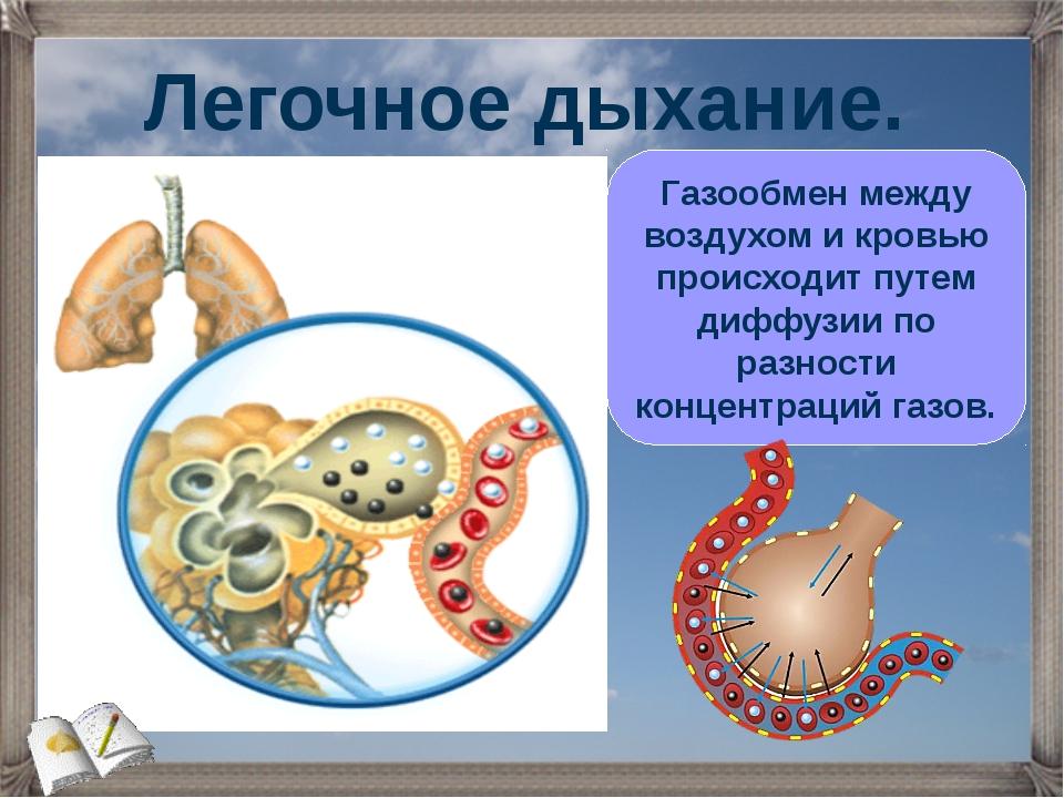 Газообмен между воздухом и кровью происходит путем диффузии по разности конце...