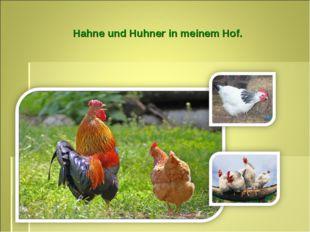 Hahne und Huhner in meinem Hof.