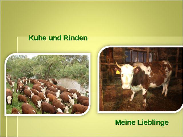 Kuhe und Rinden Meine Lieblinge