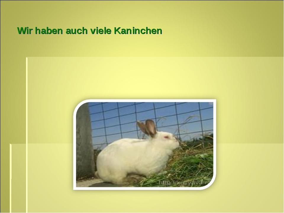 Wir haben auch viele Kaninchen