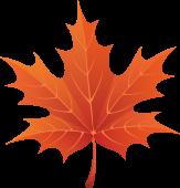 Клиновый осений лист