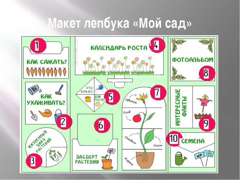 Макет лепбука «Мой сад»