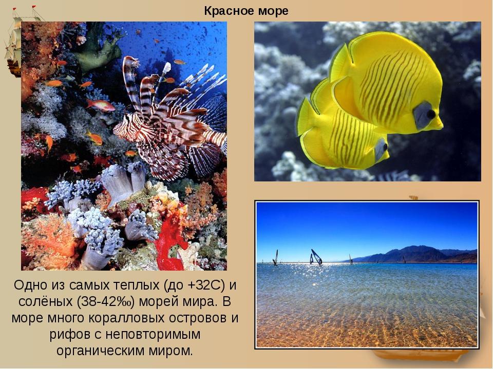 Красное море Одно из самых теплых (до +32С) и солёных (38-42‰) морей мира. В...