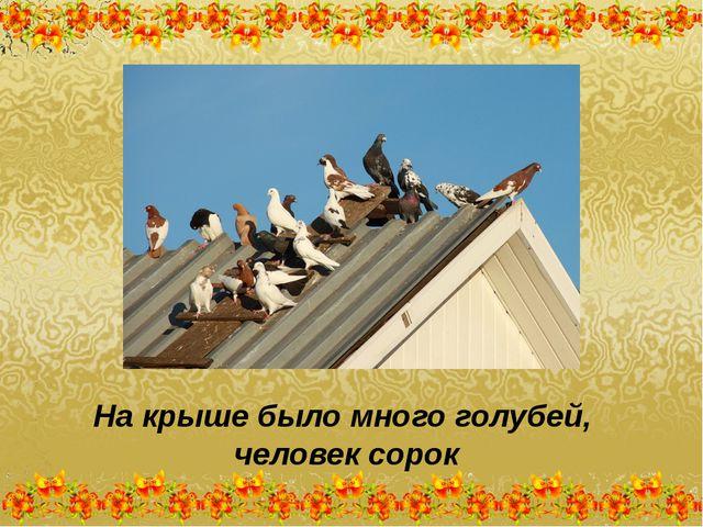 На крыше было много голубей, человек сорок