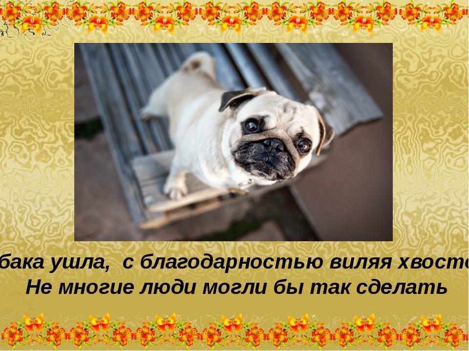 Собака ушла, с благодарностью виляя хвостом. Не многие люди могли бы так сдел...