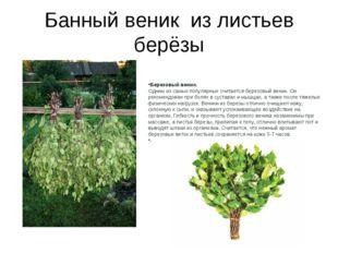 Банный веник из листьев берёзы Березовый веник. Одним из самых популярных счи
