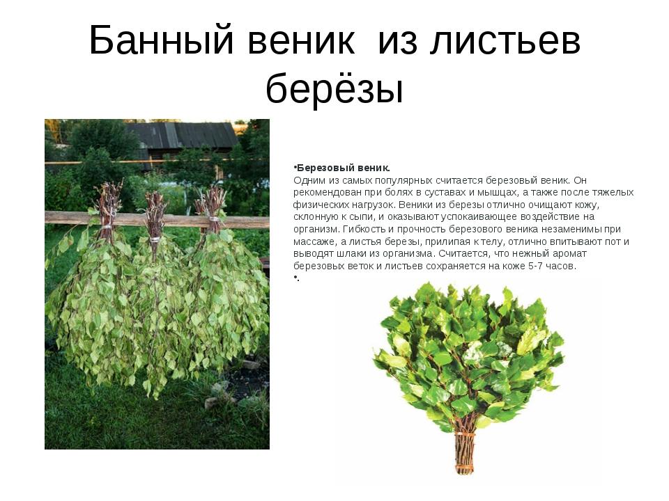 Банный веник из листьев берёзы Березовый веник. Одним из самых популярных счи...