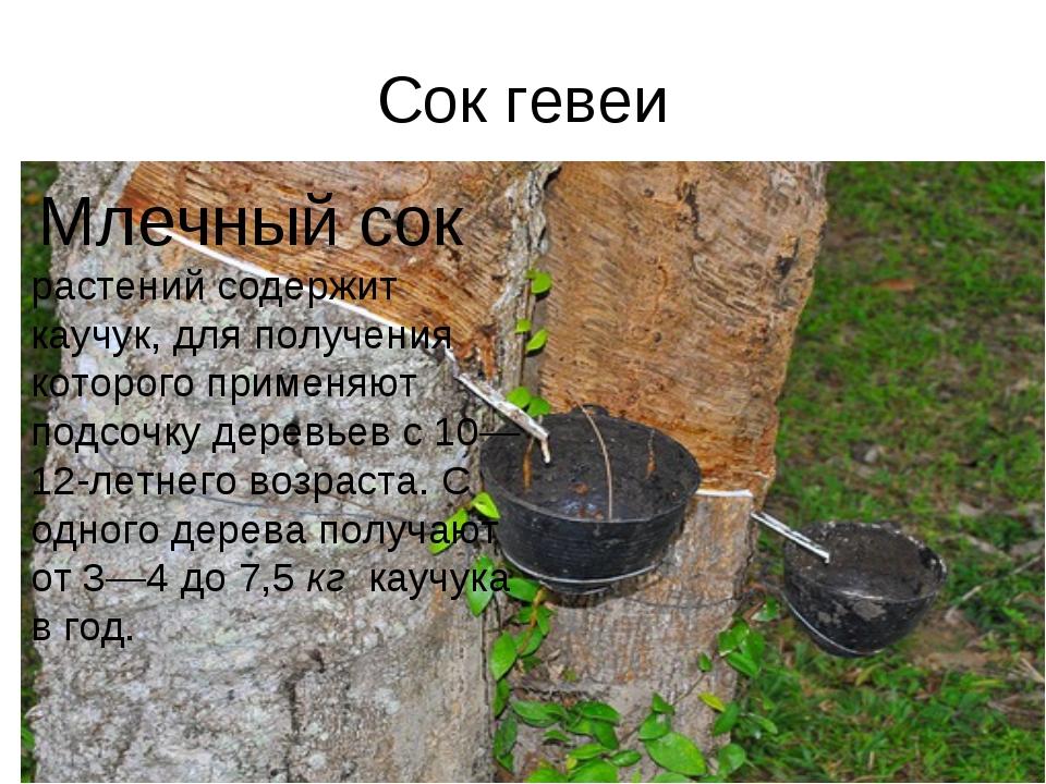 Сок гевеи Млечный сок растений содержит каучук, для получения которого приме...