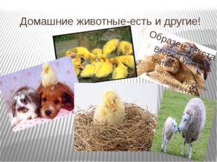 Домашние животные-есть и другие!