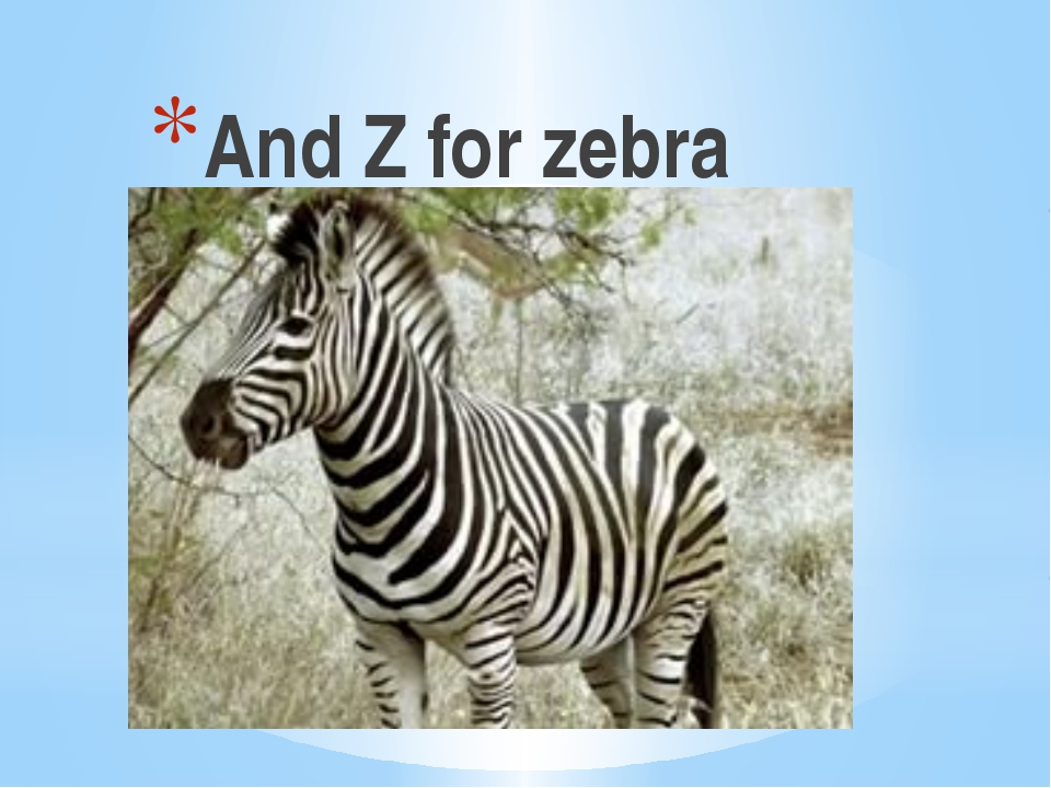 And Z for zebra