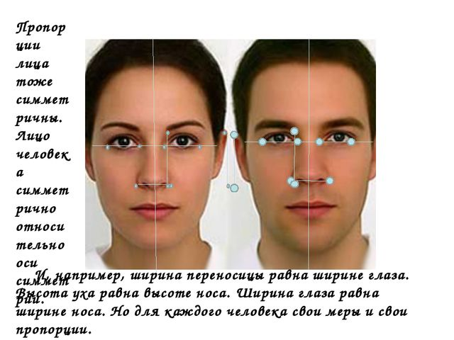 Пропорции лица тоже симметричны. Лицо человека симметрично относительно оси с...