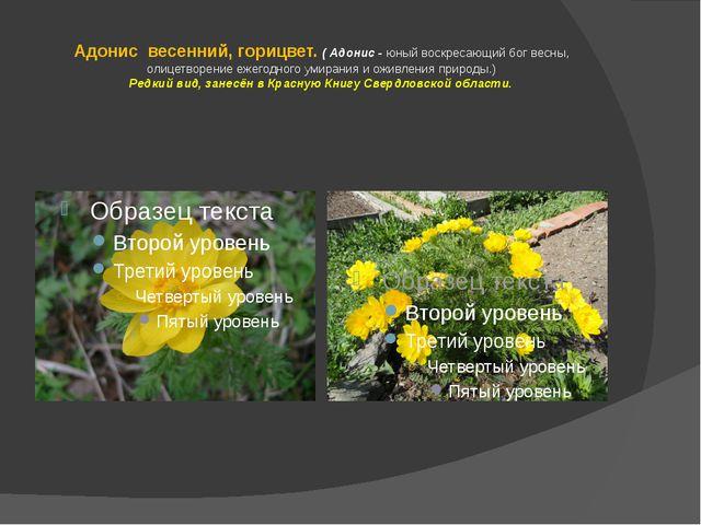 Адонис весенний, горицвет. ( Адонис - юный воскресающий бог весны, олицетворе...