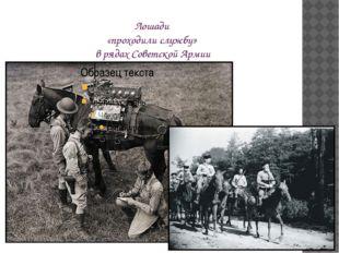 Лошади «проходили службу» в рядах Советской Армии