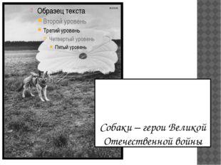 Собаки – герои Великой Отечественной войны