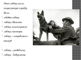 Наши собаки несли самую разную службу, были: ездовые собаки собаки-связисты