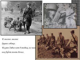 И многие-многие другие собаки. Их уже давно нет в живых, но память о них буде