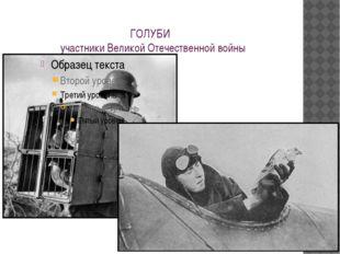 ГОЛУБИ участники Великой Отечественной войны