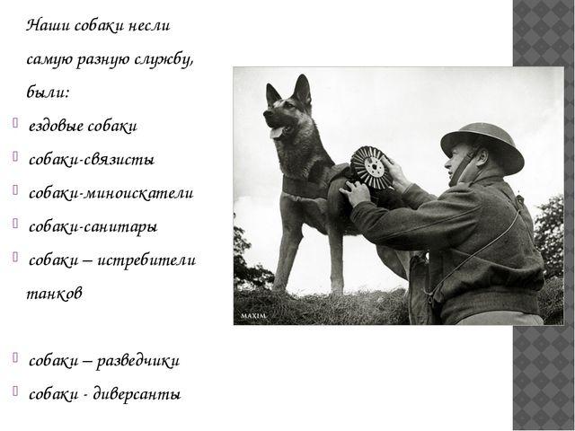 Наши собаки несли самую разную службу, были: ездовые собаки собаки-связисты...