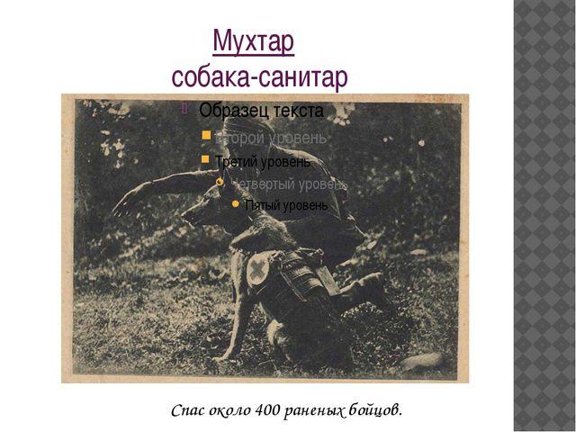 Мухтар собака-санитар Спас около 400 раненых бойцов.