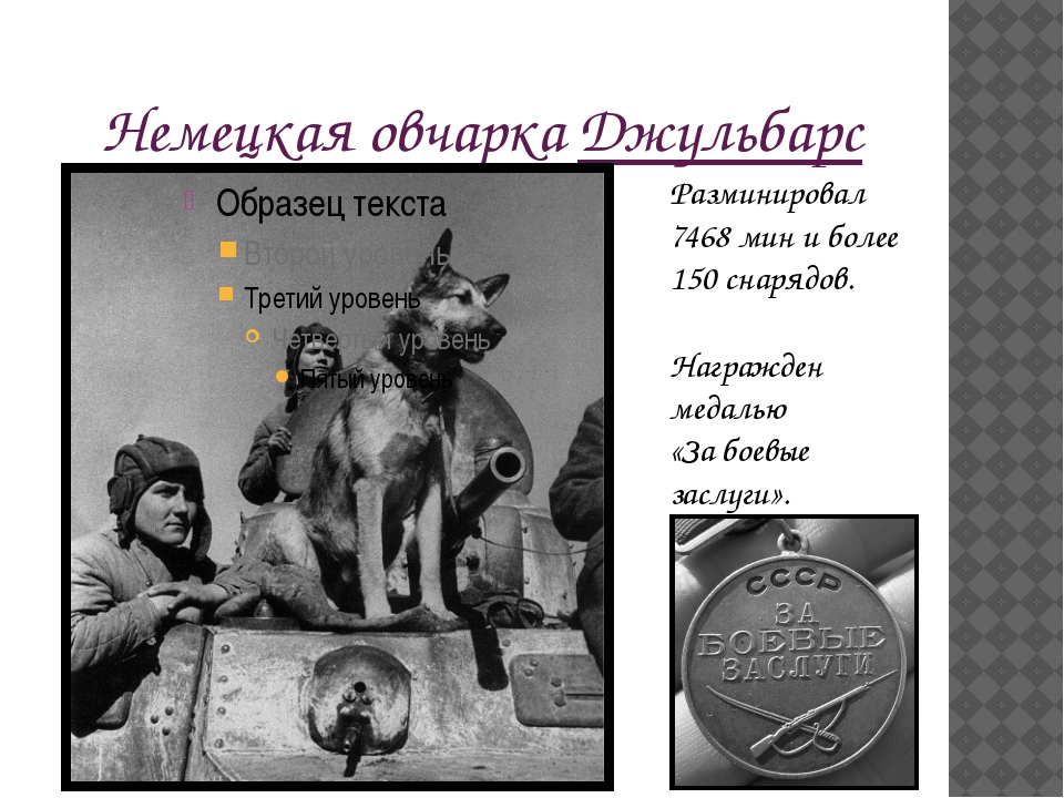 Немецкая овчарка Джульбарс Награжден медалью «За боевые заслуги». Разминирова...